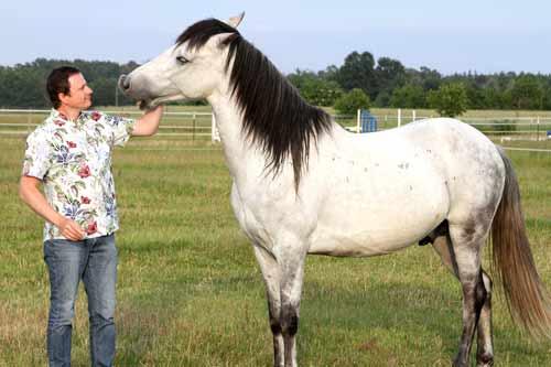 Angstfrei mit dem Pferd