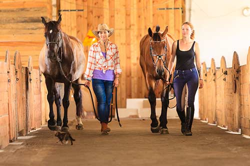 Ausbildung fitequi® Coach & Trainer sowie fitequi® Stressmanagement Coach – November Start 1