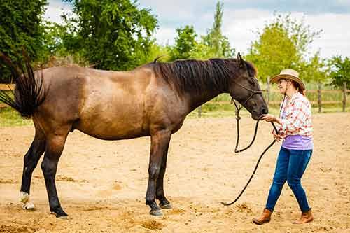 Frau arbeitet mit dem Pferd am Boden
