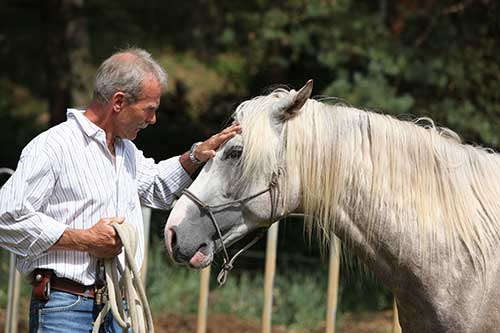 Unternehmer beim Coaching mit dem Pferd