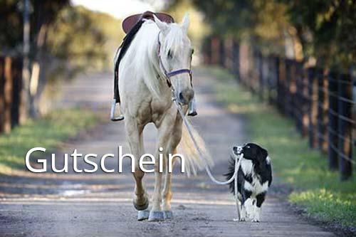 Hund führt Pferd am Strick