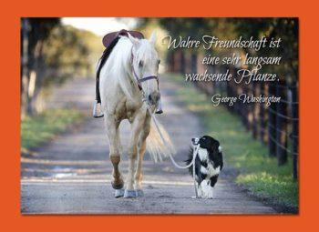 Gutschein Karte Pferd & Hund