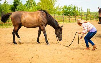 Horsemanship – Bodenarbeitskurs – Fernstudium