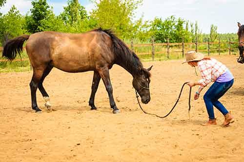 Frau mit ihrem Pferd beim Training Horsemanship