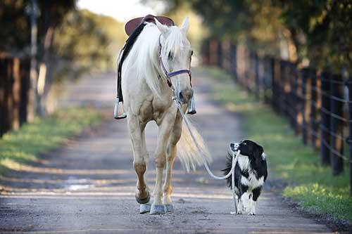 Ein Hund führt ein Pferd am Strick zwischen den Zähnen