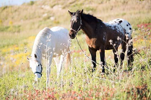 Pferde in artgerechter Haltung
