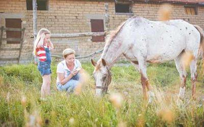 Pferde fit füttern – pferdegerechte Fütterung