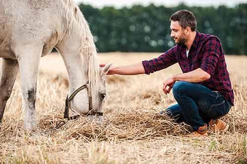 Mann streichelt das Pferd während es frisst