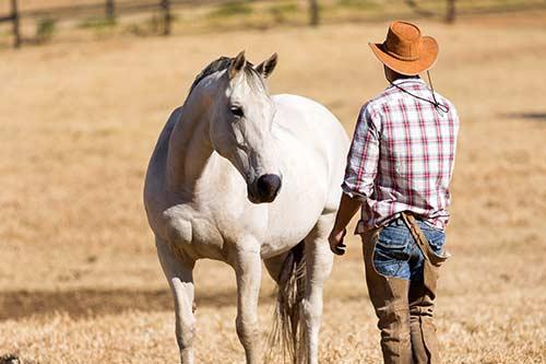 Pferdegestütztes Coaching - Kurs