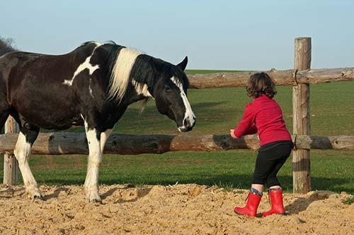 Kind kommuniziert mit dem Pferd